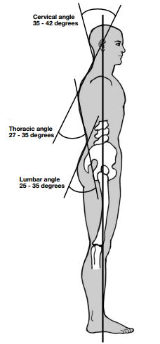 Spinal Curve